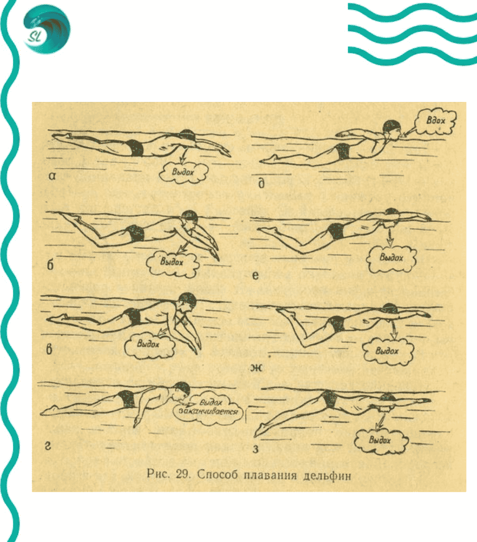 Plavanie-delfinom